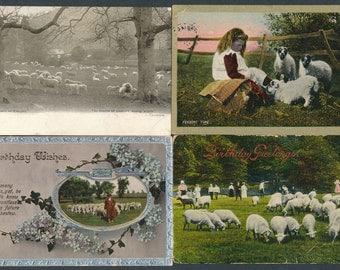 Sheep on 6 vintage postcards dating from 1903 onwards posted in England  Nice varied selection PZA1