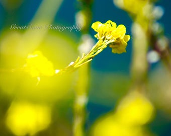 Yellow Buds, Photography, Home Decor