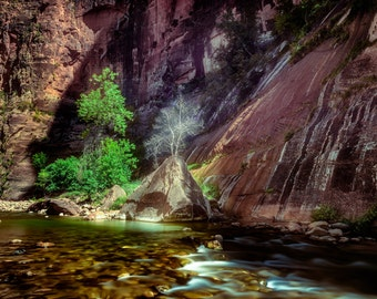 Zion River Walk