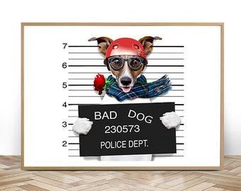 Funny jack russell ,Mugshot dog-JPG-300 dpi -dog pictures,dog images,montage dog