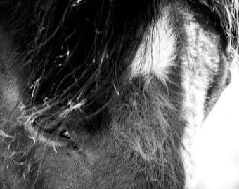 Wild Horses Black and White