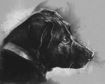 Realistic Sketched Custom Pet Portrait