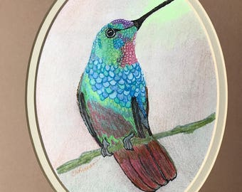 Hummingbird -- Matted