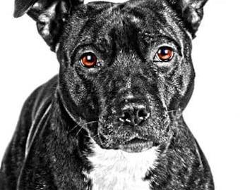 A4 Staffordshire Bull Terrier print