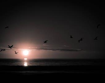 Mullaloo Beach, Sunset and Birds,