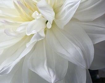 White Dahlia Wedding Card, Flower Card