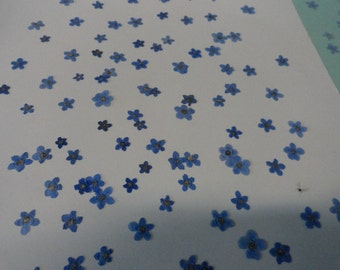 Choose your Alaskan Grown and Pressed Forget me not Flowers over 100 593 FL