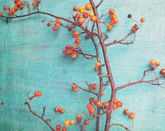 Whimsical Art - Fine Art Photography - Still Life Art Print - Orange Blue - Botanical Art - Cottage Chic - Farmhouse Wall Art - Nature Print