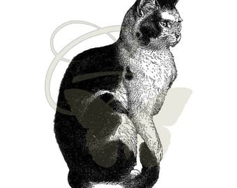 Cat Antique Artwork Printable Clip Art Digital Download Scrapbooking Crafting Illustration