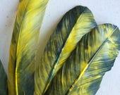 TURKEY QUILL, Green Yellow TieDye , 4 pieces / Q-15