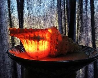 Fruits de Mer - Huge Frog Shell Candle