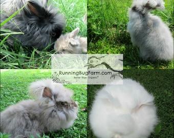 Angora Fiber Spinning Fiber Rabbit Wool Natural Mixed Raw Wool Lot English Angora Rabbits Fur Natural Cruelty Free Eco Friendly USA / 2 Oz