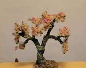 Miniature bonsai peaches tree flowering