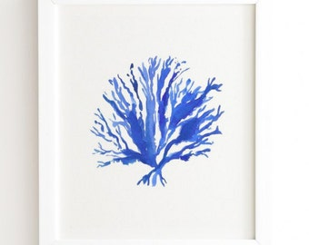Sea Coral Framed Wall Art