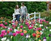 50% Off - Ashe Design Digital Background, Background Replacement, Photography Backgrounds & Backdrops, Tulip Bridge, Park Bridge Tulip field
