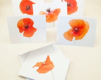 Set of 12 Blank Greeting Cards of Poppy Flowers, Photographed in my own Garden