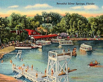 Vintage Florida Postcard - Silver Springs (Unused)