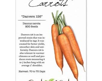 Carrot Seeds, Danvers 126 (Daucus carota) Non-GMO Seeds by Seed Needs