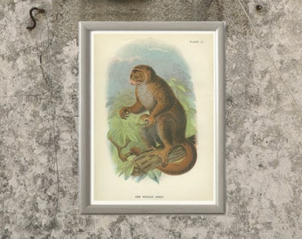 Woolly Avahi Lemur Monkey, Antique Lithograph, Keulemans 1896/10, Victorian Wildlife Picture, Primate Natural History Chromolithograph