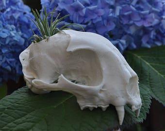 Beautiful Hand Made Bobcat Skull Replica Cactus Succulentor Small Flower Pot