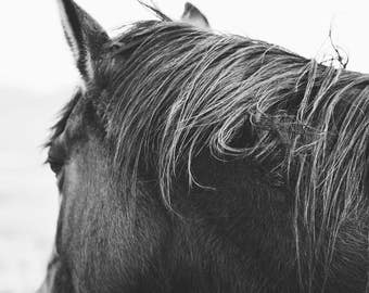 Tangled Mane | Modern Horse Photography in Black and White | Rustic Horse
