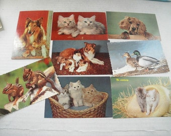 Eight Puppies Kittens Etc Color Photo Postcards 1950s Cute