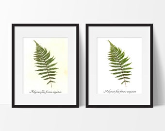 Lady Fern Pressed Botanical Print - Real Fern Herbarium Reproduction Print - Botanical Wall Art Print - Home Decor