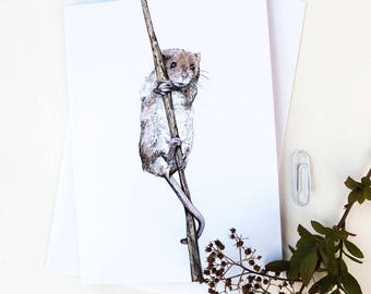 Blank Card - Eilidh Harvest Mouse - Pencil Drawing