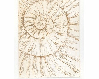 Original ammonite fossil zinc etching no.41 jurassic Dorset coast fossil spiral fossil ammonites golden section