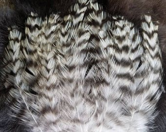 Natural Striped Grizzly Rooster Hackle Feathers - Hand Selected - Lot of 50