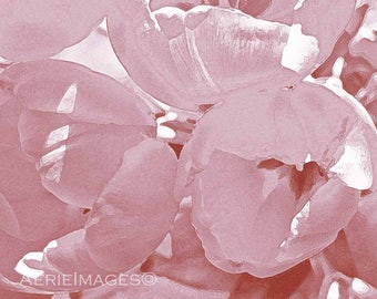 Blush Pink Tulips, 5x7 or 8x10 Flower Photo Spring Girls Feminine Decor