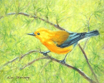 Prothonotary Warbler Bird Wildlife Painting Original Oil Impressionist Ready To Hang Wall Art Unique Gift By Kim Stenberg
