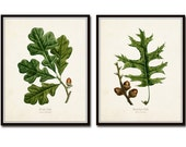 Vintage Oak Leaf Print Set No. 5, Botanical Print, Vintage Botanical, Giclee, Art, Oak Leaf, Vintage Botanical, Leaf Prints, Illustration