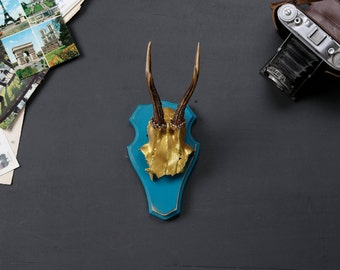 "Stylish wall sculpture, deer antler with scull, deer scull, deer mount, wall decoration, antler hook, antlers,  ""Gustav"""