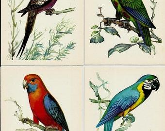 Parrots, Vintage Postcards Drawing set of 16, Illustrations of Birds by Albova unused 1981