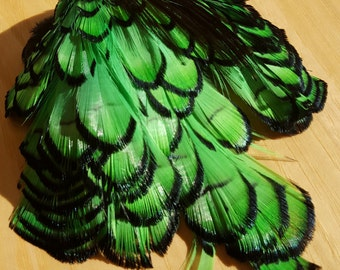 Bright Green Lady Amherst Pheasant Feathers, Approx 60+ Feathers, Wholesale Closeout