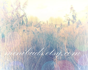 Wetlands 'Whispering Reeds' digital download. Nature photography, botanical wall art. Atmospheric bokeh sunset. NOT A PHYSICAL ITEM.
