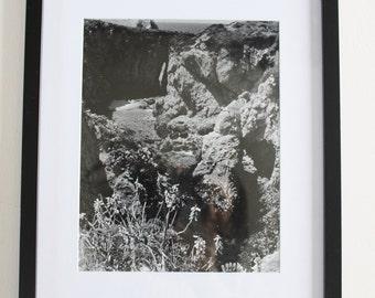 Black and white vintage nature photography, vintage art, photograph, artwork, wall decor, wall art, art, nature photos black and white film