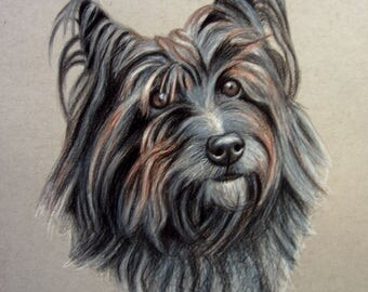 Custom Conte and Colored Pencil Portrait on Gray Toned Paper, Pet Portrait, Dog Portrait, In Memory, Mixed Medium Portrait, Free Shipping