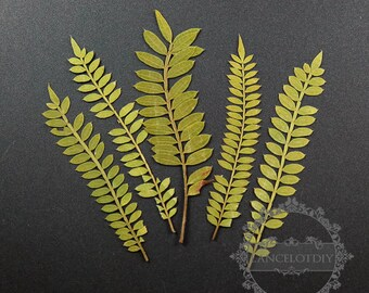 1pack 3-8cm long dry pressed tree leaf material for glass dome resin 10pcs each pack 1503134