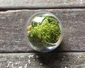Custom listing for Laura Hand Blown Moss Terrarium