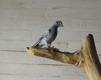 Miniature Pigeon 1:12scale ~ Dollhouse Miniature ~ Realistic Birds ~ Pets ~ Animals ~ OOAK Miniatures by Katie Doka