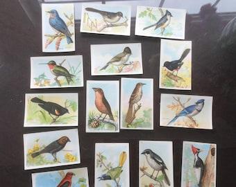 Arm & Hammer Bird Trade Cards - 7th Series - Church n Dwight