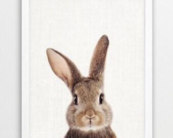 Bunny Print, Rabbit Print, Woodlands Animals Art Photo, Printable Nursery Animal Wall Art, Baby Animal Color Photo Print, Kids Room Decor