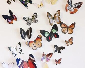 20 hand cut butterflies