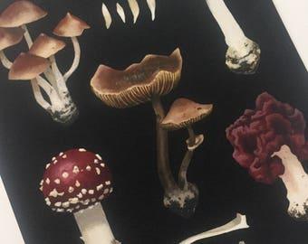 8x10 Fine art print, poisonous mushrooms, mycology, fungi, natural history, nature, deadly, poisons, pop surrealism