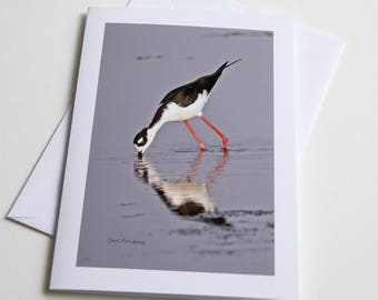 Note Card - Black Necked Stilt