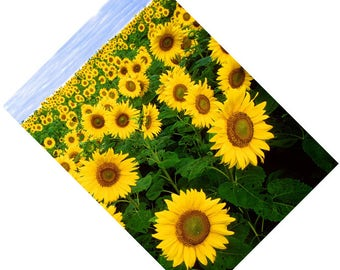 Passport Cover Holder Case -- Sunflowers