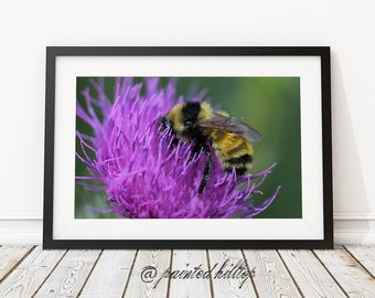 Thistle Photography, Botanical Photography, scottish thistle, Purple and Green Wall Art, Colorful Decor, Kitchen Art, Flower Photography