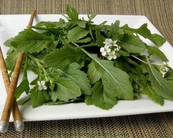 VLA) WASABI ARUGULA~Seeds!!!~~~~~Amazing Flavor!